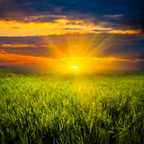 Beautiful sunset in meadow Royalty Free Stock Photo