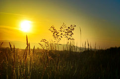 Beautiful sunset on the meadow Royalty Free Stock Photography