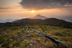 Beautiful sunset on the mountain with dead tree Stock Photo