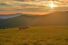 Beautiful sunset in the mountains. Of the Carpathians Royalty Free Stock Photos