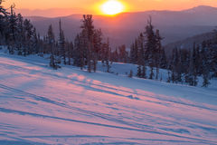Beautiful sunset in the mountains. Winter landscape with fir trees in the snow Royalty Free Stock Photography