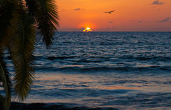 Beautiful sunset om ocean or sea beach Royalty Free Stock Images