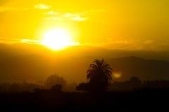 Beautiful sunset orange light Royalty Free Stock Image