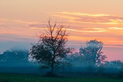 Beautiful sunset with orange and red sky. Tree and mist in the filed Stock Photography