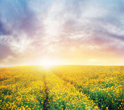 Beautiful sunset over the colorful meadow Royalty Free Stock Image