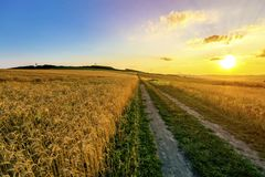 Beautiful sunset over countryside dirt gravel road and ripe whea. T fields Stock Images