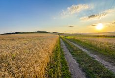 Beautiful sunset over countryside dirt gravel road and ripe whea. T fields Royalty Free Stock Photos