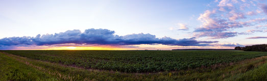 Beautiful sunset over the field Royalty Free Stock Photos