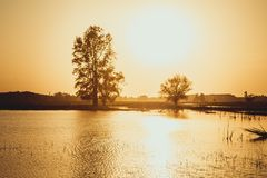 Beautiful sunset over the forest lake Stock Photography