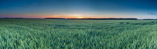 Beautiful sunset over green field Stock Photo