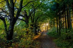 Beautiful sunset over park in autumn royalty free stock photography