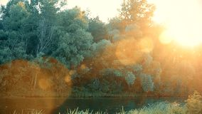 Beautiful sunset over river in summer with lense flare. S. The sun shines through foliage of deciduous trees over calm water surface stock footage