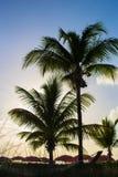 Beautiful sunset over sea beach with palmtree Stock Photos
