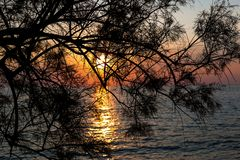 Beautiful sunset over the sea through the branches of tree stock image