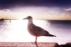 Beautiful sunset over sea with lonely seagull Royalty Free Stock Photo