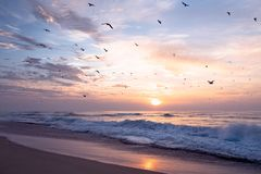 Beautiful sunset over the sea in pink color with flock of birds stock photography