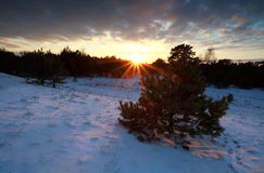 Beautiful sunset over snowy winter forest Stock Image