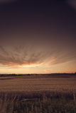 Beautiful sunset over summer field Royalty Free Stock Images