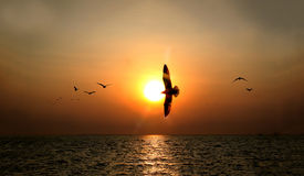 Free Beautiful Sunset Over The Sea With Seagull Silhouettes On Pier Stock Photography - 56938792
