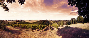 Beautiful Sunset Over The Vineyards In Tuscany Stock Images