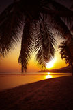 Beautiful sunset over the tropical beach Stock Image