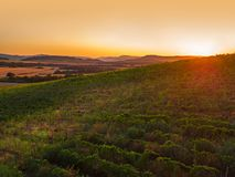 Beautiful Sunset over vineyard in Europe, aerial view Stock Images
