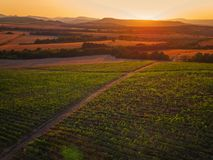 Beautiful Sunset over vineyard in Europe. Agricultural fields. Stock Photography