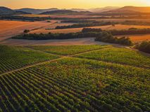 Beautiful Sunset over vineyard in Europe, aerial view. Beautiful Sunset over vineyard in Europe stock images