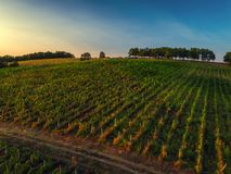 Beautiful Sunset over vineyard in Europe, aerial view Stock Photos
