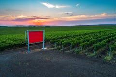 Beautiful Sunset over vineyard field in Europe Stock Image