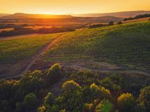 Beautiful Sunset over vineyard fields in Europe, aerial view Royalty Free Stock Photography