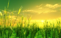 Beautiful sunset over the wheat field stock illustration