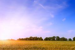 Beautiful sunset over wheat field. Royalty Free Stock Photo