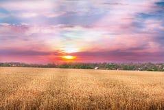 Beautiful sunset over wheat field. Stock Image