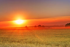 Beautiful sunset over the wheat field Stock Photos