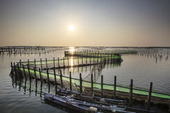 Beautiful sunset in Oyster Farm Stock Photography
