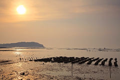 Beautiful sunset at Oyster Farm Stock Images