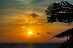 Beautiful sunset with palm Royalty Free Stock Photo