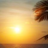 Beautiful sunset with palm Stock Photo