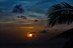 Beautiful sunset with palm Stock Photos