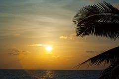 Beautiful sunset with palm Stock Image