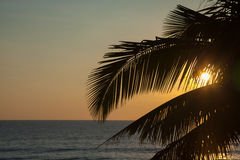 Beautiful sunset with palm Stock Photography