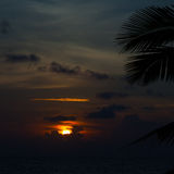 Beautiful sunset with palm Stock Images
