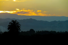 Beautiful sunset and palm Royalty Free Stock Photography