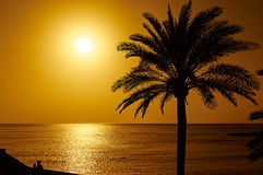 Beautiful sunset with a palm tree on Tenerife Stock Images