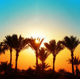 Beautiful sunset with palm trees Stock Photography