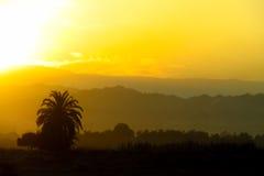 Beautiful sunset palm trees silhouette Stock Photo
