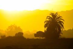 Beautiful sunset and palm Stock Photography