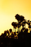 Beautiful sunset with palms silhouettes at beach. Beautiful tropical sunset with palm trees silhouettes at beach, California, USA Royalty Free Stock Photos