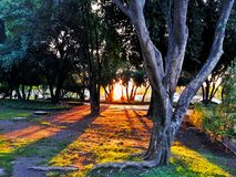 Beautiful sunset in the park. An orange sunset in the park royalty free stock photo